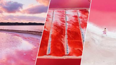 Photo of แปลกแต่จริง ทะเลสาบสีชมพูหวานแหววในออสเตรเลีย